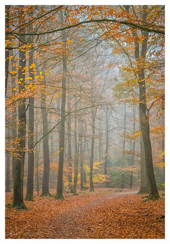 Autumn atmosphere