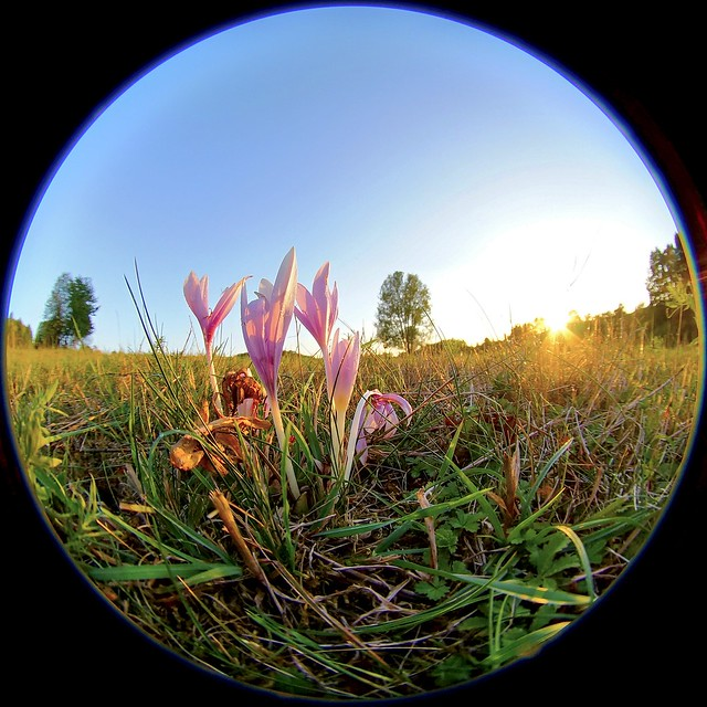 fisheye landscape view