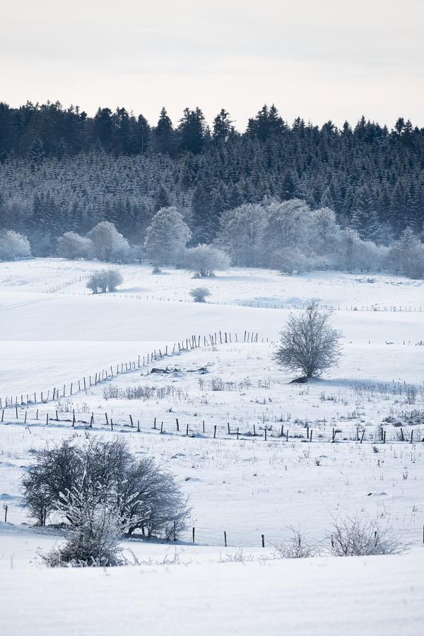 Un peu de neige 45938345075_88c5ff1d8d_o