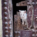 Cat at Rabat Medina