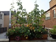 My Garden 18-07-26 (1)