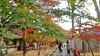 Photo:18f0416 By kimagurenote
