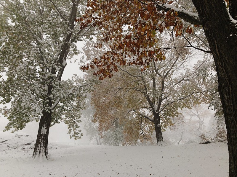 November Snow in Central Park