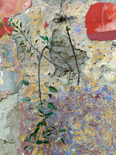 Puebla, Mexico: an abstract created by textures of paint and plaster on a wall