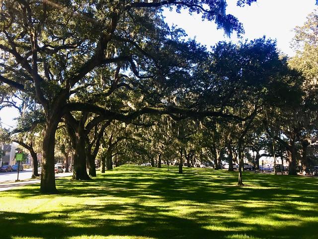 A winter day in Savannah Georgia.