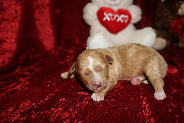 2 Tinker Belle10.8 oz 2 days old  (23)