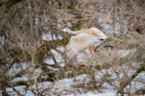 Crane Flight (2)