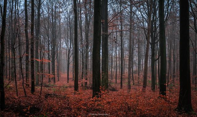 Autumn colors 5