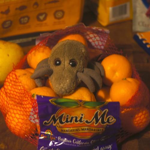 Maxi Mite, Mini Me