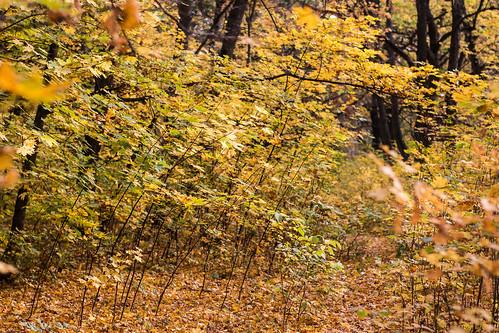autumn forest poltava ukraine travel nature