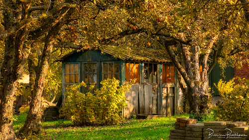 Old shed in an old orchard