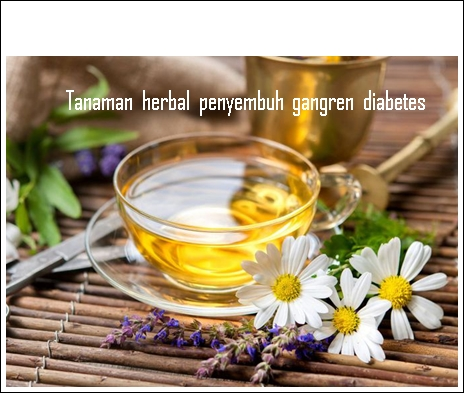 Obat Luka Gangren Diabetes Dari Tanaman Herbal