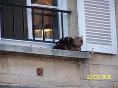 Fr iun 09 260 À Falaise (dép. du Calvados, région de Basse-Normandie, France) : un chat, devant une fenêtre, observe les environs