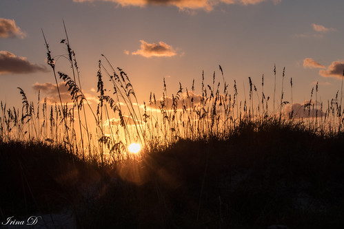 sunrise reeds dunes sand beach ocean atlantic sun sky cloud light morning beautiful saintaugustine nature canon october 2018