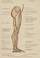 Vintage illustration of lower limb published in 1899 by James M Dunlop. Original from New York public library. Digitally enhanced by rawpixel.
