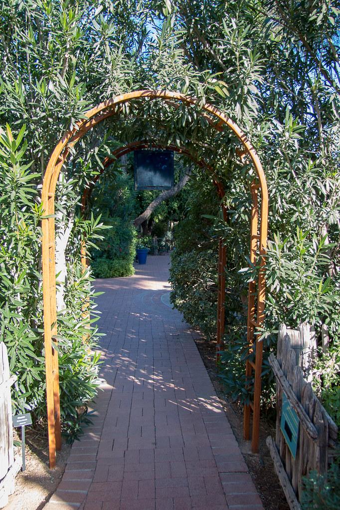 Herb garden area at Tucson Botanical Gardens
