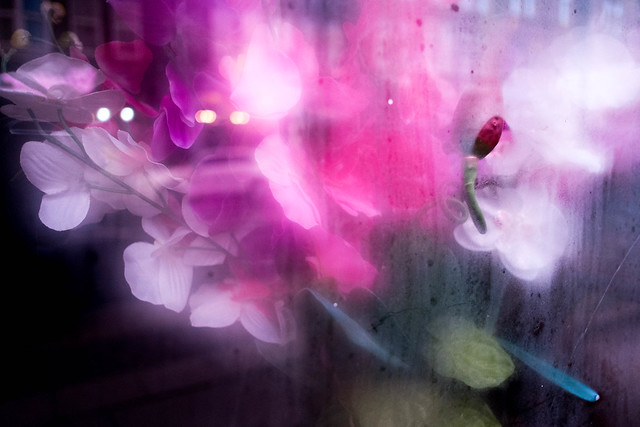 Flowers, Abbeydale Road, Sheffield, 2018, Fujifilm X-Pro1, XF18mmF2 R