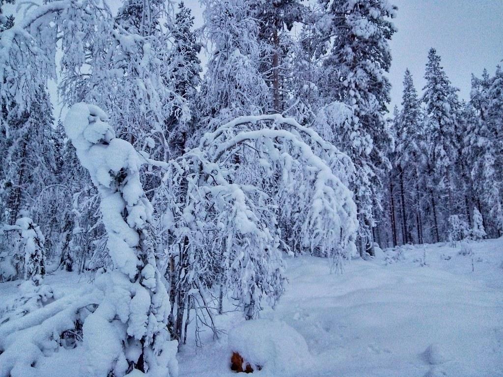 Lapland near Mäntyvaara