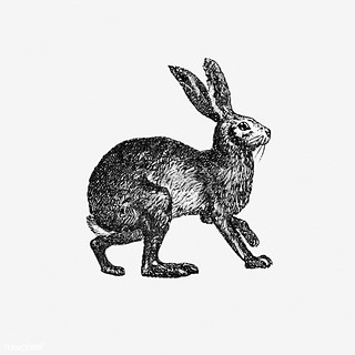 Vintage hare illustration | by Free Public Domain Illustrations by rawpixel