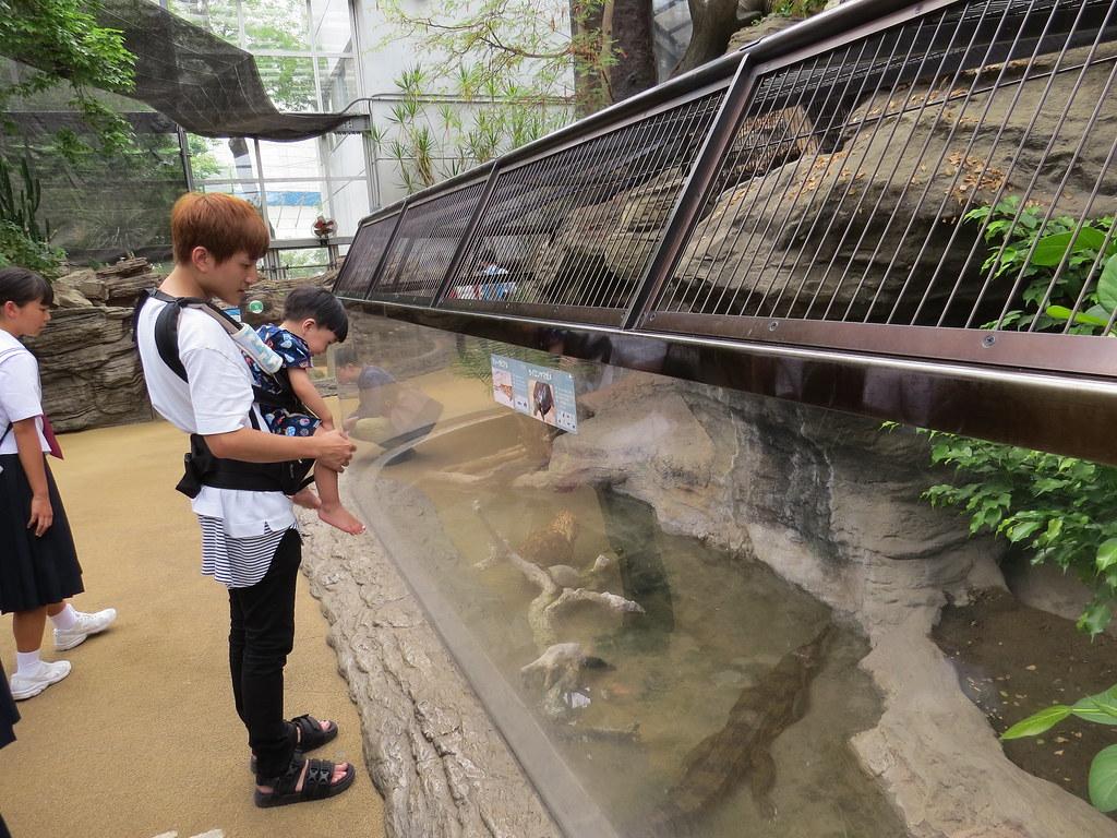 TOKYO ZOO上野動物園(兩光媽咪柳幼幼) (18)