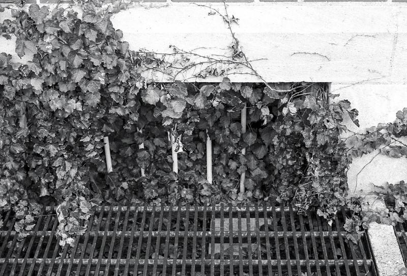 Vine Coloured Window One
