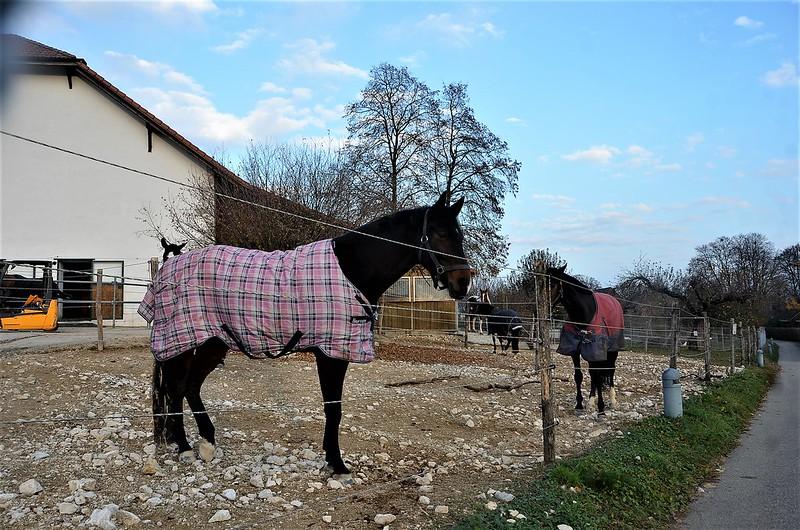 Horses 20.11 (1)