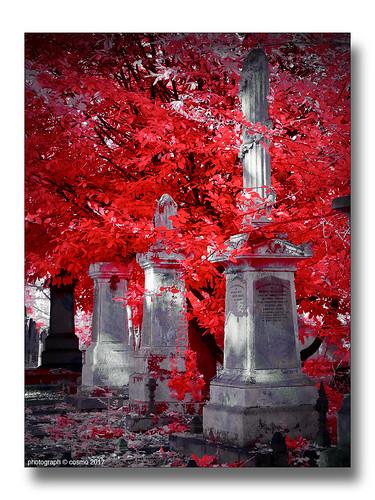 Tower_Hamlets_Cemetery.
