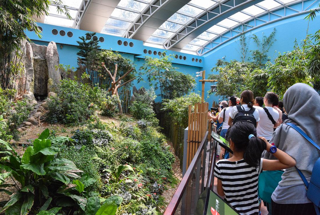 Singapore-zoo-(13)