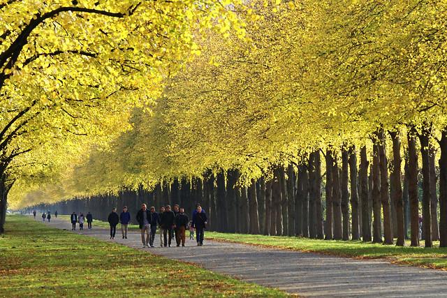 Herbstspaziergang in Herrenhausen, Sony ILCA-77M2, 70-400mm F4-5.6 G SSM