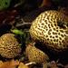 prickly fungi