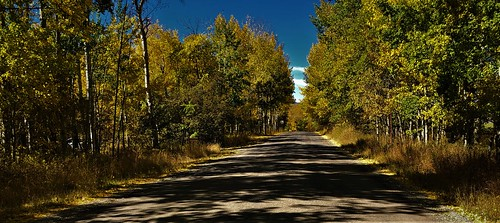 Country Road in Fall Colors