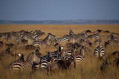 2018 Kenia Safari