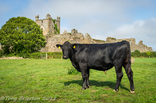 The Gaurdian of Dunbrody.