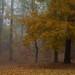 Mist on the fen