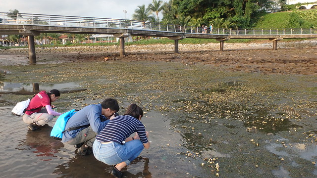 Seagrasses on Berlayar Creek