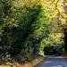 Autumn colours of Burnham-10