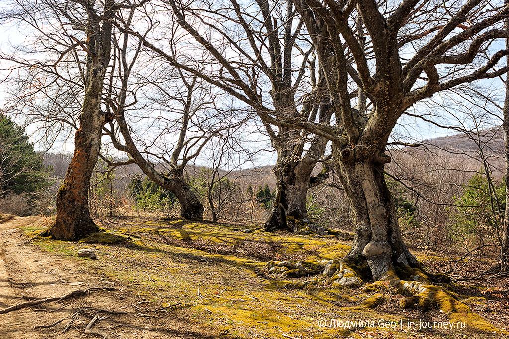необычные деревья в крыму