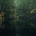 Fairy tale Bridge + WonderPana CPL Filters by FotodioxPro