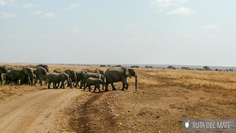 Animales hacer un safari P1140906