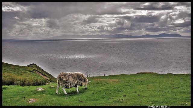 Vision écossaise ( Scottish vision)