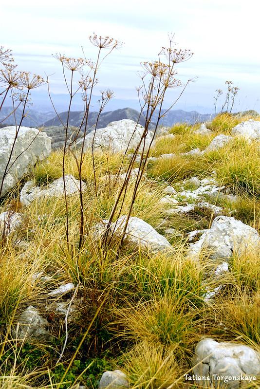 Травы на вершине