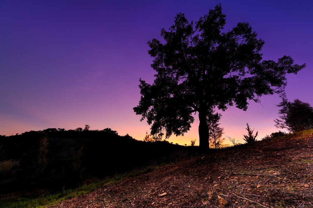 Purple Sunset In The Hills Of The Algarve