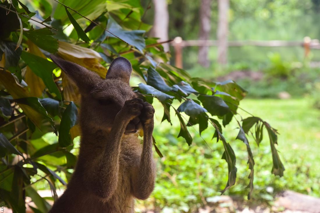 Singapore-zoo-(49)