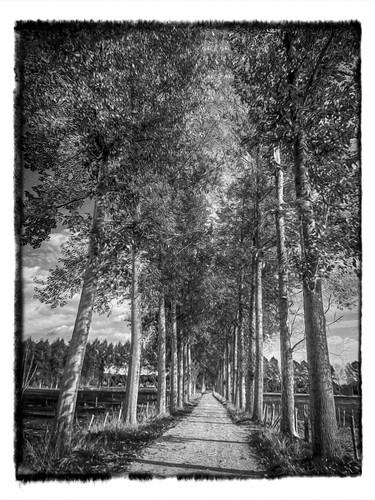 Trees in B&W