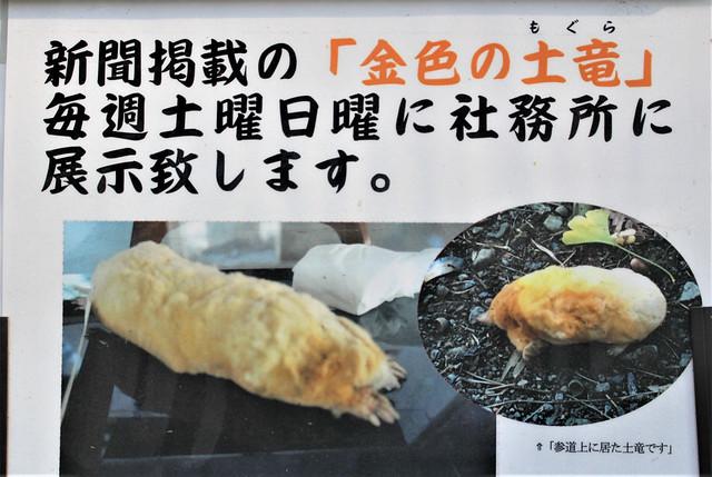 shimotsukehoshinomiya042