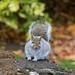 Fat squirrel on rotting tree stump