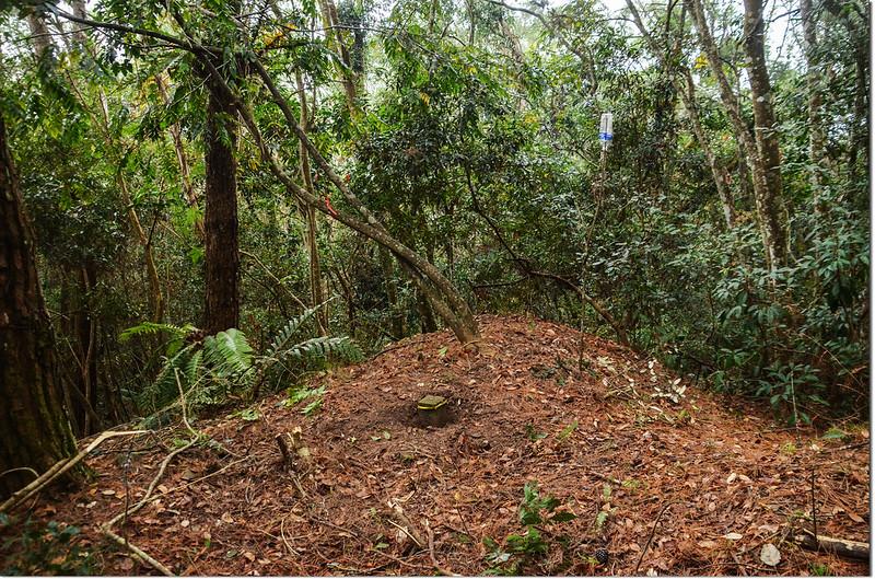 歐帕喀爾山冠字補近(25)山字森林三角點點位
