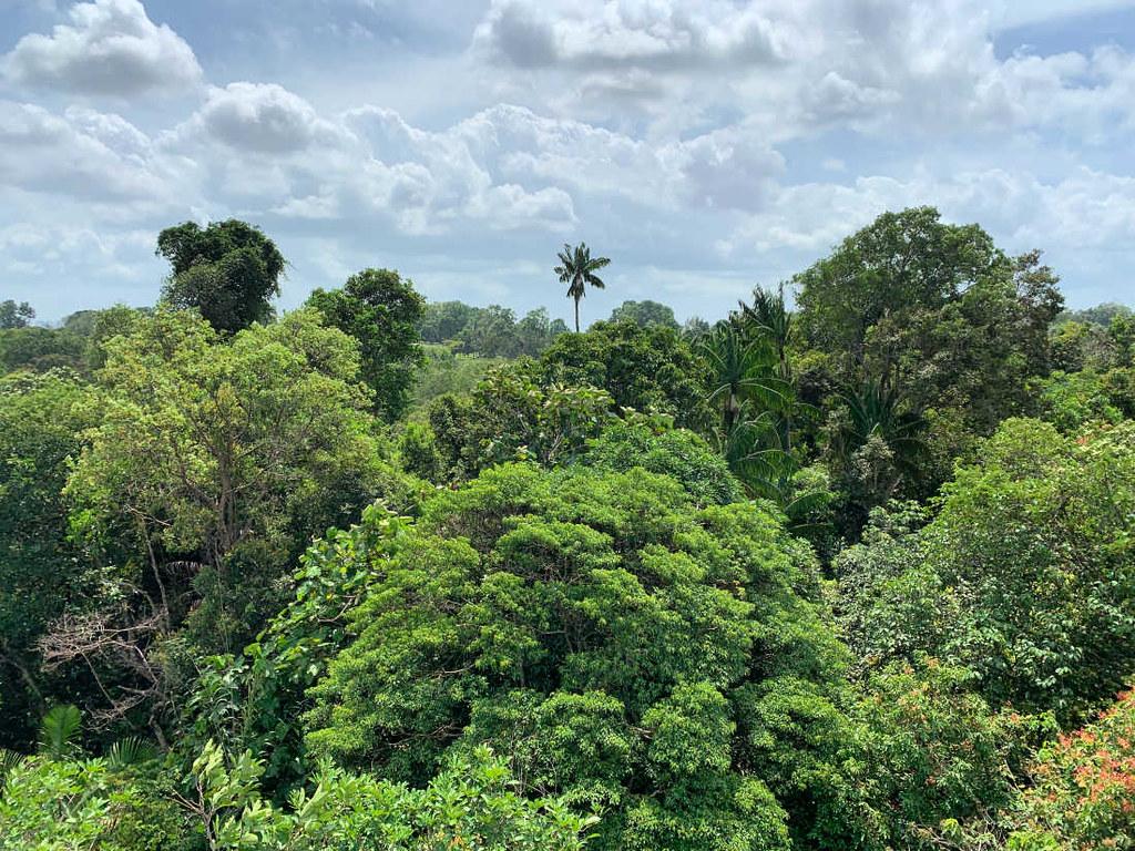 Trekking in Singapore: Tower Top