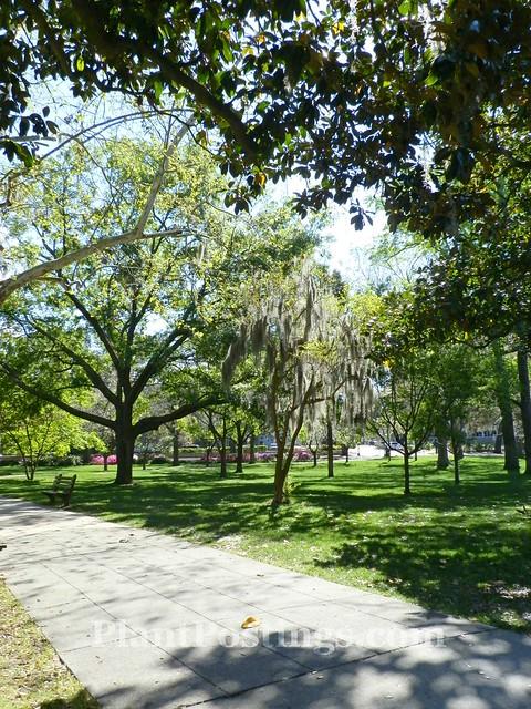 forsyth park walkway 2