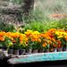 Flores a la orilla por Oliver Castelblanco Martínez